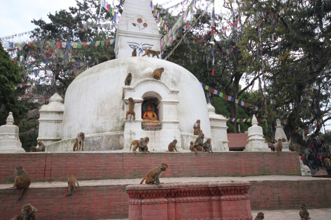 monkey-temple-kathmandu-monkey-meeting