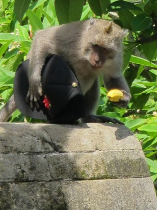 A thief monkey stole someone's hat! And banana...