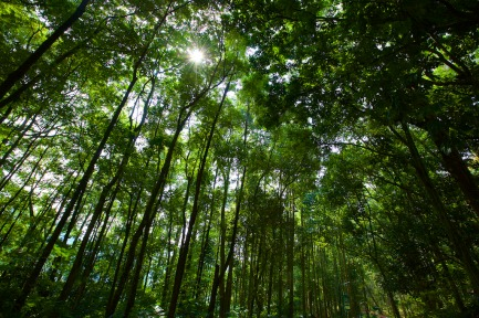 The forest in Juanda Forest Park.